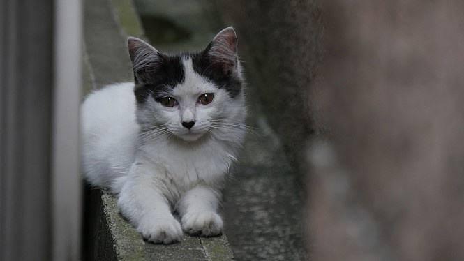 夏目濑石的我是猫读后感2.jpg