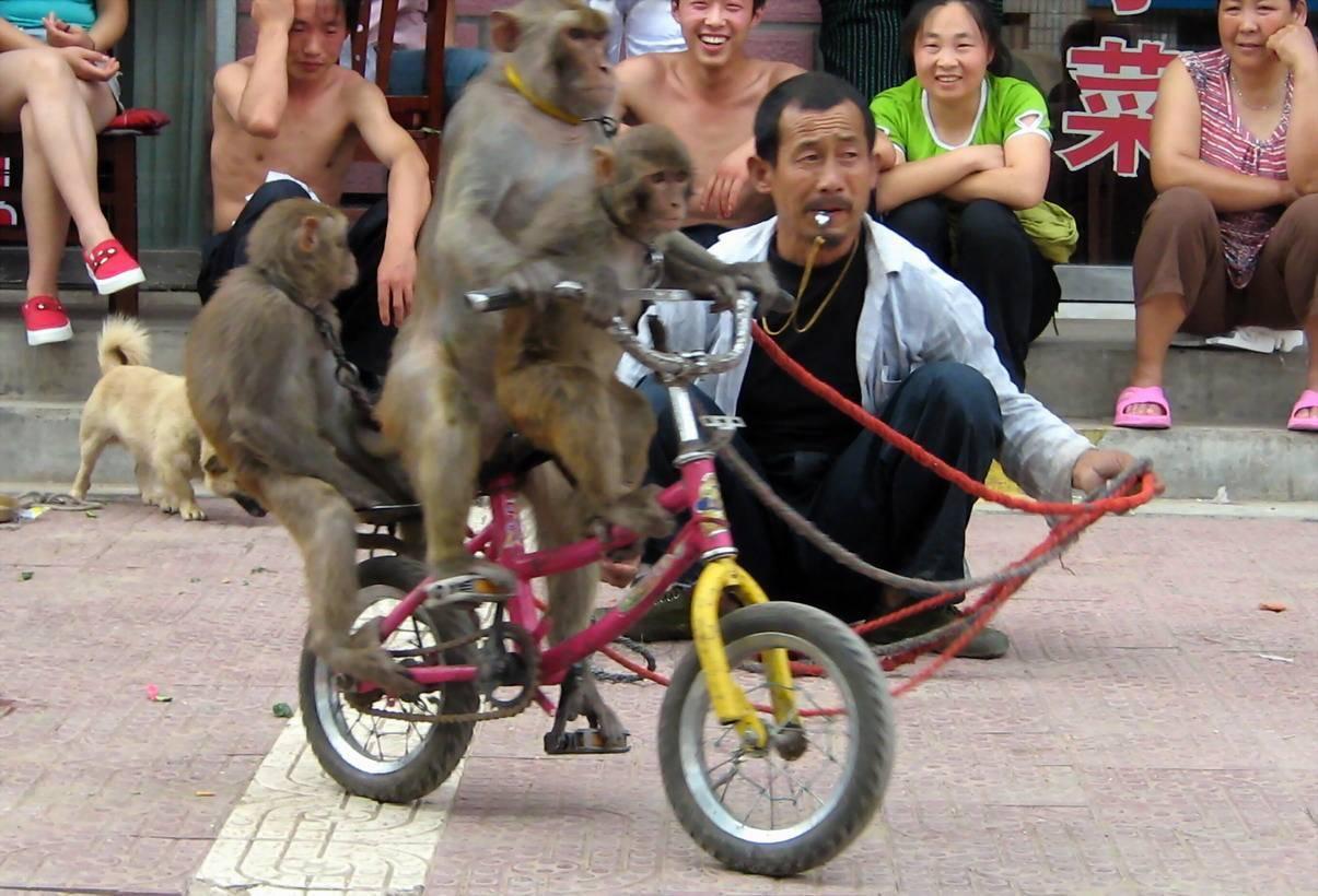 最后的耍猴人2.jpg