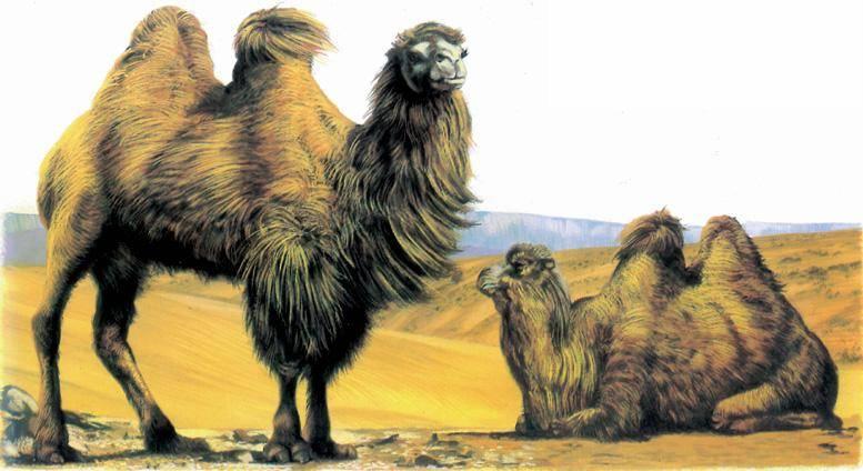 《哭泣的骆驼》插图.jpg