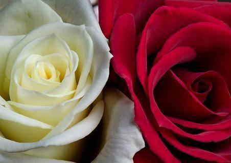 红玫瑰与白玫瑰封面.jpg