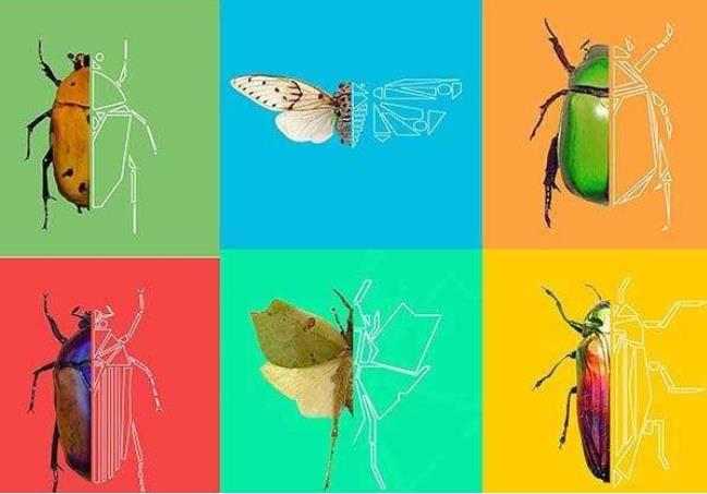 昆虫记读后感插图.jpg